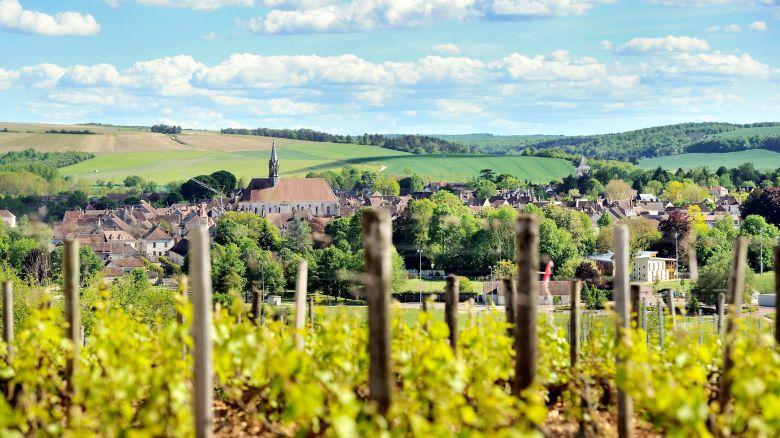 Vue sur le vignoble de Chablis, dans l'Yonne. / © Jérémie Fulleringer - MaxPPP